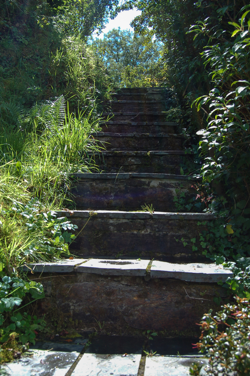 Steps to the orchard